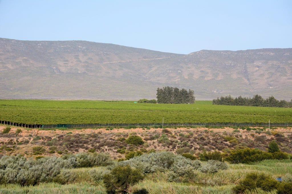 olifants-vinregionen-landskap