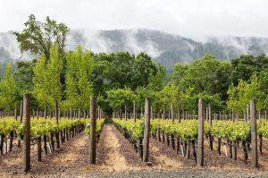napa-valley-vin