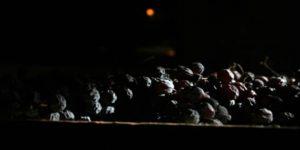 amarone-vin-druvor