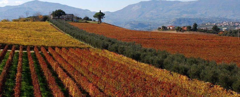 abruzzo-vinregionen-landskap