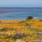 coastal-region-vinregionen-landskap