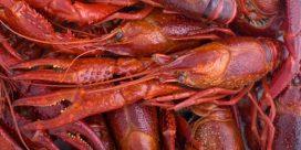 Experten tipsar: Vin till skaldjur