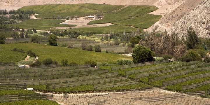 Hemera enkelt vingård