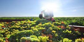 Upptäck Rueda – ett snabbt växande vinområde i Spanien