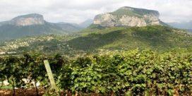 Njut av vin på Mallorca