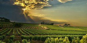 fakta om franska viner
