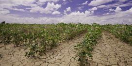 Globalt klimat påverkar vinkartan