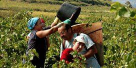 Vin och det ekologiska fotavtrycket