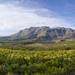 stellenbosch-vinregionen-landskap