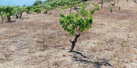Vredens druvor – vin i en ålder av klimatförändringar