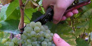 vitikulturfront