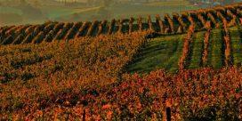 Res till regionen Armagnac i Frankrike och upptäck en lång tradition av vinodling