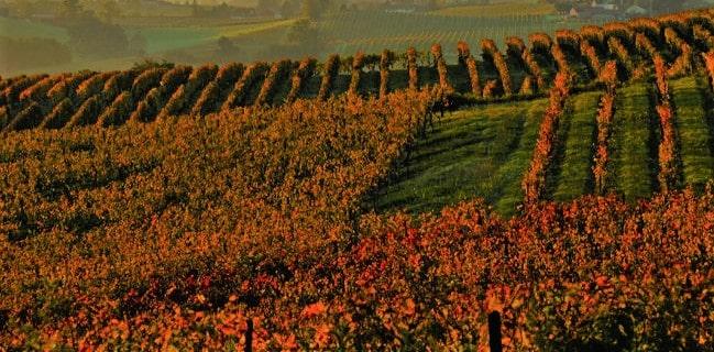 Armagnac Vinregion