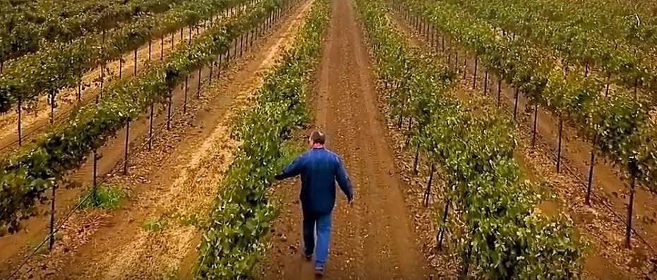 Dave Nagengast i vingården