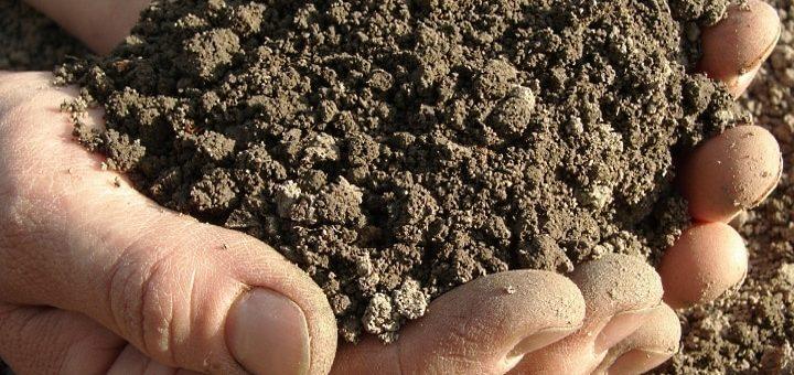 en hand full av jord