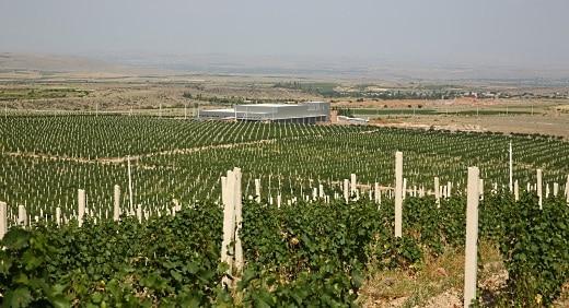 Armenien vy över vingårdar med berg i bakgrunden