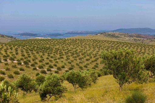 Dalmatien: utsikt över vingårdar