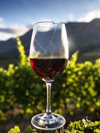 boktips - boken om sydafrikanska viner