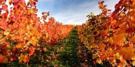 De bästa vingårdarna i Herault och Gard – Din insiderguide