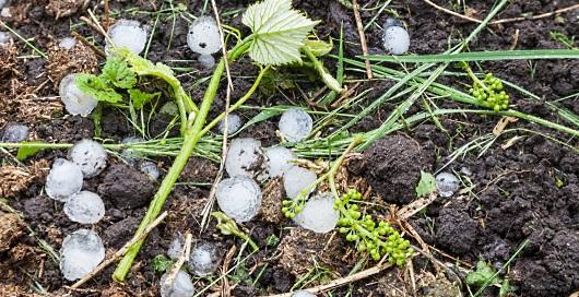 Bourg och Blaye: hagel