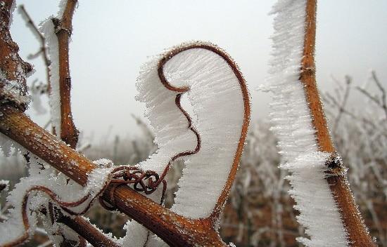 vintender - frost