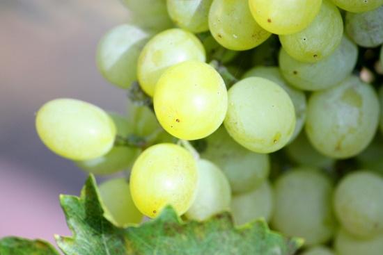 Jura - en klase Chardonnay