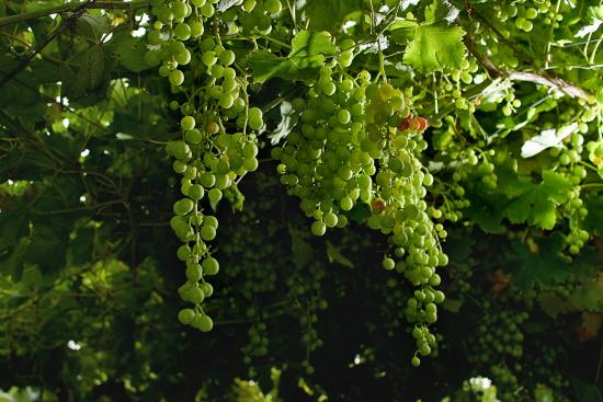 madia-monteulciano-dabruzzo-pergola