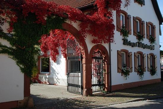 Pinot Noir - Wilhelmshof ett fint hus