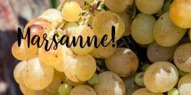 Prova druvan Marsanne från Rhônedalen!