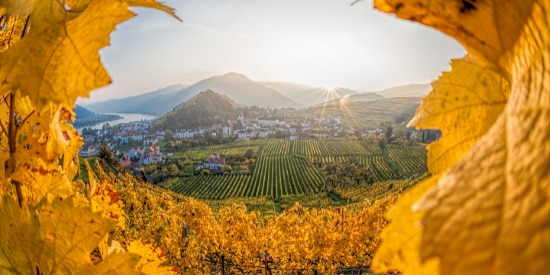 Vinlandet-Österrike  utsikt över vingårdar
