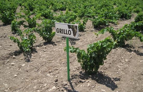 vingården - på sommaren
