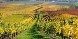 Puglia – En av de bästa vinregionerna i Italien – Din insider guide till vingårderna