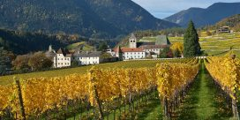 Vingårdar i Alto Adige