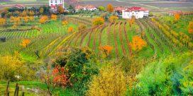 Friuli – Vinregionen i Norra Italien – Här är din insider guide till vingårdarna