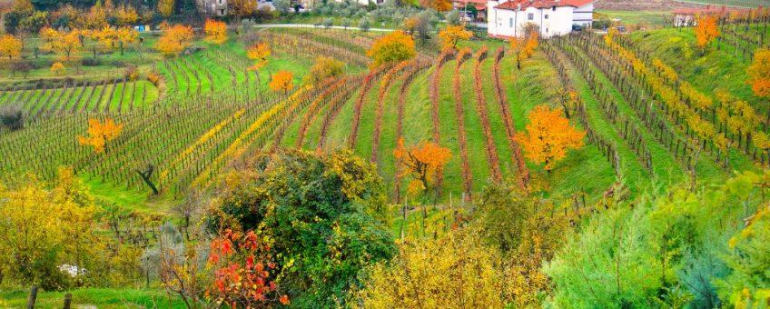 friuli wine region