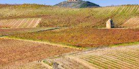 Rioja, en vin-metropol i norra Spanien!