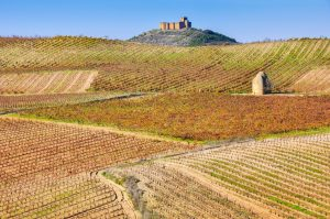 Rioja_vineyard and Davalillo castle