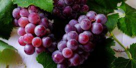 Snabbkurs –  de populäraste druvorna!