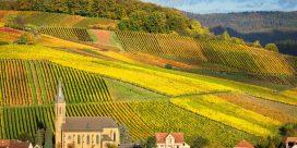 Pfalz – Tysklands nästa största vinregion