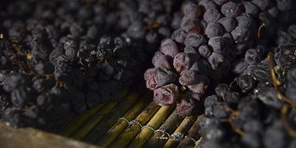 Ripasso - torkade druvor