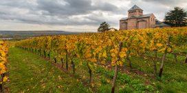 Rheinhessen och Rheingau – två fantastiska vinregioner i Tyskland