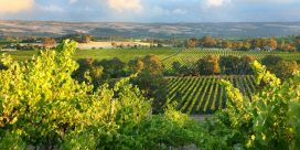 Din guide till vinregionen South Australia och de bästa vingårdarna