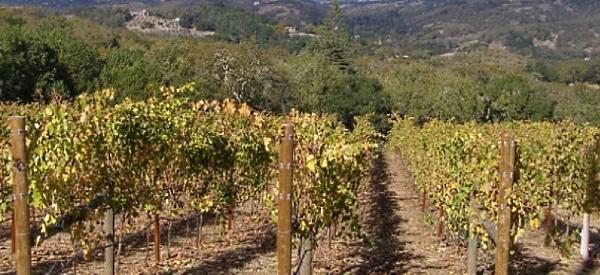 Fritz Russian River Chardonnay - vinrankor