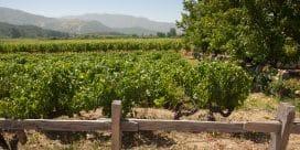 Nya Världens viner: Chile – och 3 vintips!