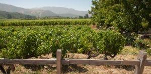 Nya världens viner - vingård i Apalta Valley