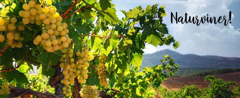 Naturvin - vingård