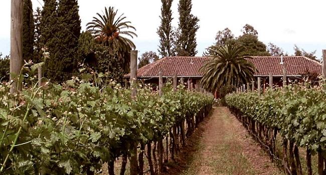 Cabernet Sauvignon - Chile