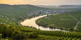Mosel – där Riesling-vinerna är de bästa!