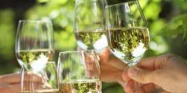 Den vilda, vita druvan – Sauvignon Blanc