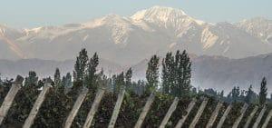 Malbec - Argentina vingård med vy över Anderna